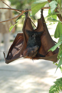 Health Issues: What You Should Know About Birds and Bats