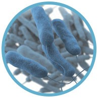 Developing a Water Management Program to Reduce Legionella